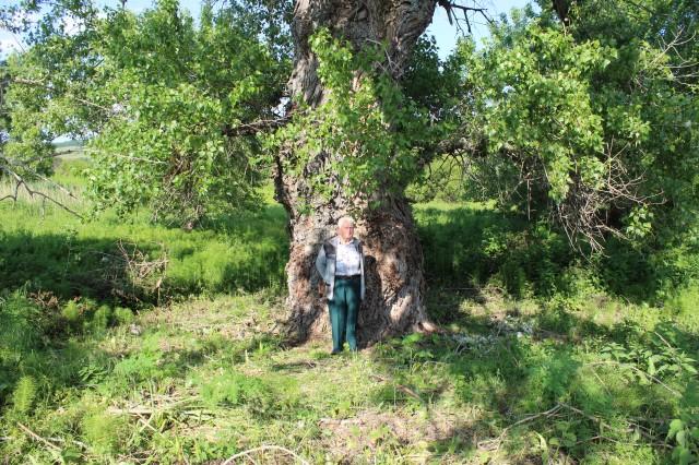 150-годишно дърво пази родова памет в село Райкова могила