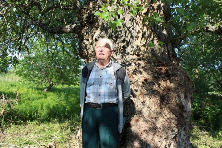 150-годишно дърво пази родова памет в село Райкова могила – Свиленград